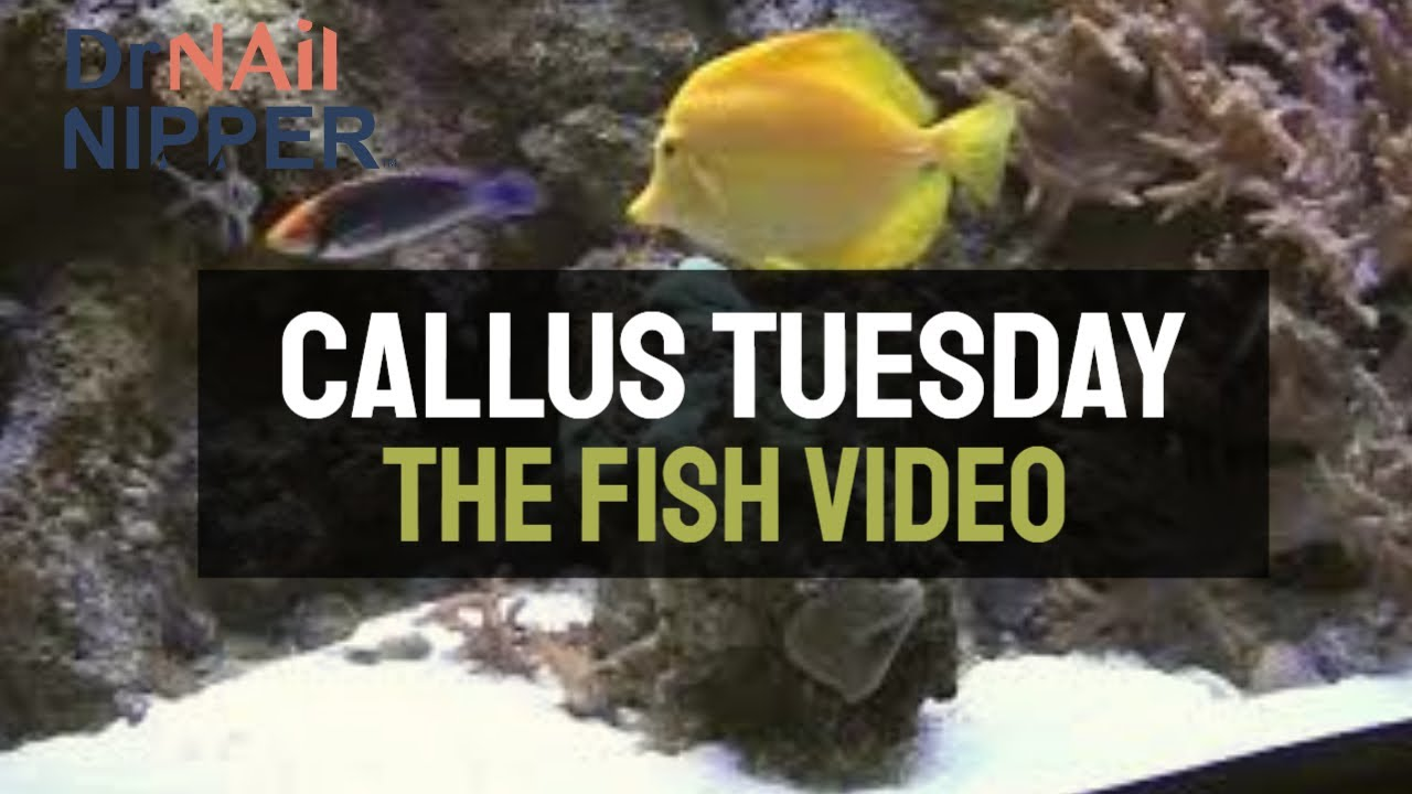 Callus Tuesday is Like a Fish Aquarium or a Babbling Brook (2020) 1