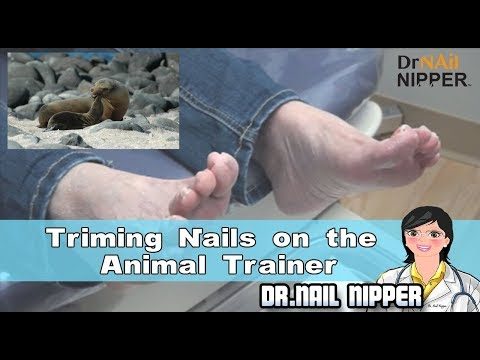 Trimming Nails on the Animal Trainer 1